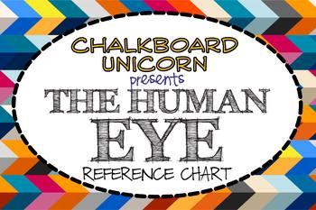 Biology: The Human Eye