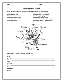 Biology! The Plant: Worksheets!
