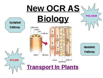 Biology - Transport In Plants