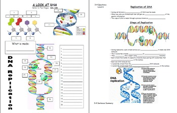 Biology Unit: DNA & RNA: *BUNDLE*