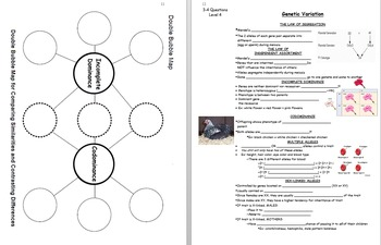Biology Unit: Genetics *BUNDLE*