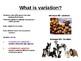 Biology - Variation, SD & Spearman's Rank