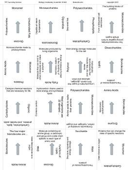 Biology Vocabulary Scramble Game: Biomolecules (B.9AD)