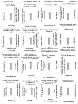 Biology Vocabulary Scramble Game: Photosynthesis and Cellular Respiration (B.9B)