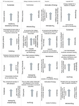 Biology Vocabulary Scramble Game: Enzymes (B.9C)