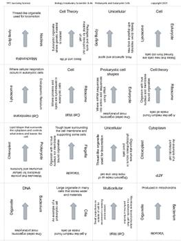 Biology Vocabulary Scramble Game: Prokaryotic and Eukaryotic Cells
