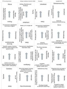 Biology Vocabulary Scramble Game: Taxonomy (B.8ABC)