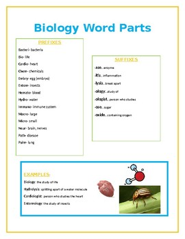 Biology Word Parts