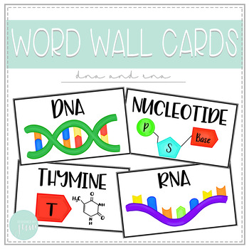 Biology Word Wall Cards - DNA and RNA