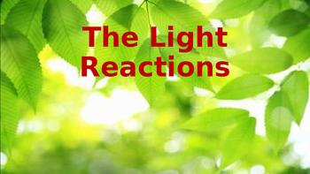 Biology Worksheet: The Light Reactions