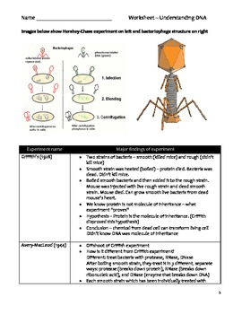 high school science biology cloze worksheet dna by educator high best free printable worksheets. Black Bedroom Furniture Sets. Home Design Ideas