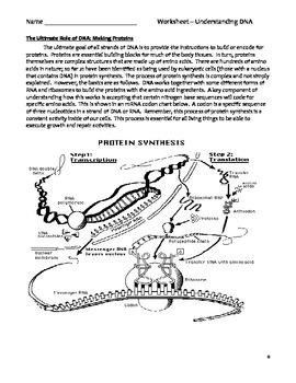 High School Biology Worksheet - Understanding DNA