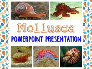 Biology / Zoology – Mollusk PowerPoint Presentation