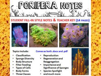 Biology / Zoology – Phylum Porifera (Sponges) Notes Handou