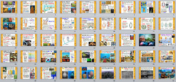 Biology / Zoology – Phylum Porifera (Sponges) PowerPoint Presentation- 45 Slides