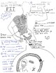 Biology's Guide to Fitness!