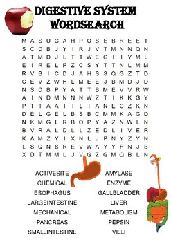 Biology word search Puzzle: The digestive system (Includes answer key)
