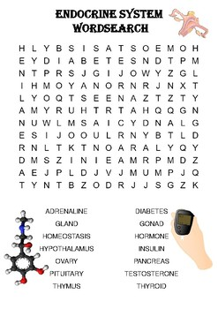 Biology word search Puzzle: The endocrine system (Includes solution)