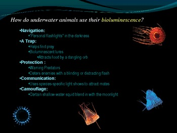 Bioluminescence Powerpoint