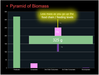 Biomass Pyramid Lesson