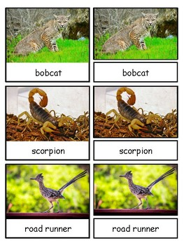 Biome/Habitat Animals based on 5 Safari Toobs