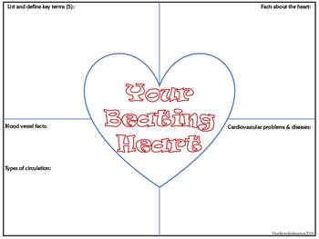 Cardiovascular Heart Frayer Model Notes
