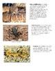 Biome Food Web