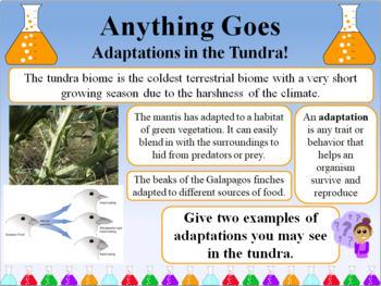 Biome and Aquatic Ecosystem Bundle