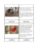 Biomes - Deciduous Forest Animals Three/Four Part Cards