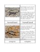 Biomes - Desert Animals Three/Four Part Cards