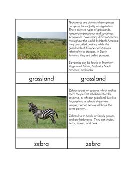 Biomes - Grassland Animals Three/Four Part Cards