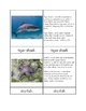 Biomes - Ocean Animals Three/Four Part Cards
