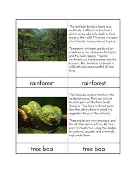 Biomes - Rainforest Animals Three/Four Part Cards