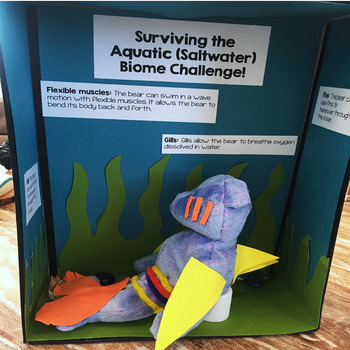 Biomes Project STEM Challenge