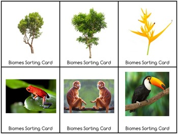 Biomes sorting cards hard goods by my rainy day creations tpt biomes sorting cards hard goods sciox Gallery