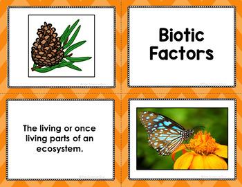 Biomes Vocabulary Sort