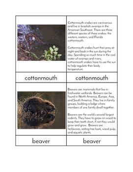 Biomes - Wetland Animals Three/Four Part Cards
