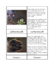 Biomes - Wetland Animals Three/Four Part Cards