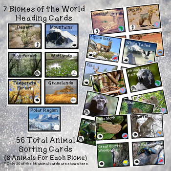Of the world animal sorting cards and graphing activities biomes of the world animal sorting cards and graphing activities sciox Gallery