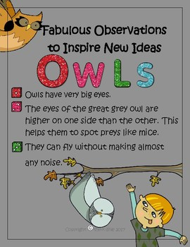 Biomimicry Fabulous Observations - Owls