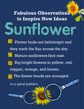 Biomimicry Fabulous Observations - Sunflower