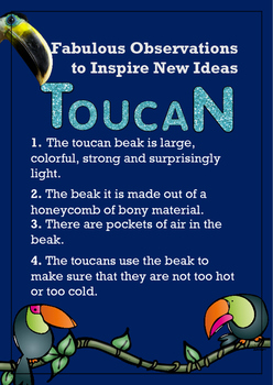 Biomimicry Fabulous Observations - Toucan