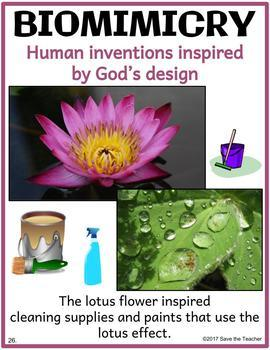 Biomimicry: Learning from Nature: Christian Educators Edition #1