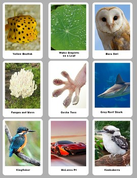 Biomimicry Playing Cards