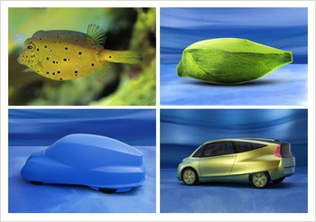 Biomimicry Powerpoint