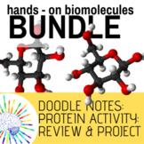 Biomolecules BUNDLE! Doodle Notes, Activities, Projects, Review!