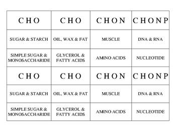 Biomolecules: Card Sort Folder