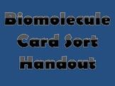 Biomolecule Card Sort Handout