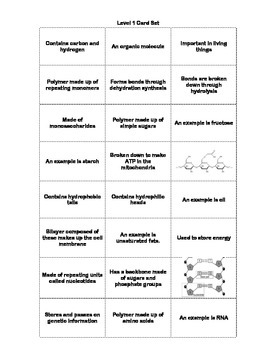 Biomolecule Choose Your Corner Formative Assessment Activity (Revised)