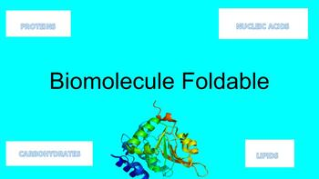 Biomolecule Foldable - Carbohydrates, Lipids, Proteins, Nucleic Acids